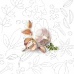 VERDURE-E-ALTRO_aglio-fette