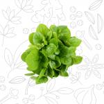 VERDURE-E-ALTRO_spinacio-foglia